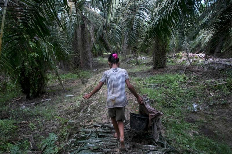 Bildet viser en jente som bærer en kurv. Hun går blant flere palmetrær.