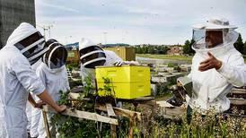 Bier skal få Oslo til å blomstre