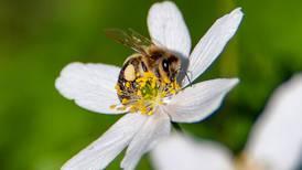 Vil at vi skal gjøre mer for biene