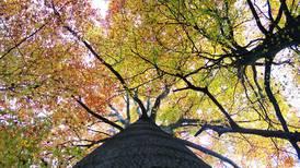 Vet du hvorfor naturen skifter farge om høsten?