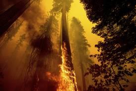 Store ødeleggelser fra branner i California
