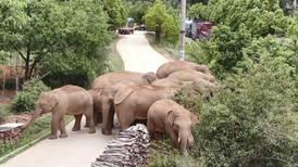 Rampete elefanter venter på treg tiåring