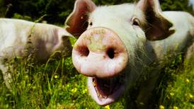 – Nei til reklame med dyr som snakker og synger