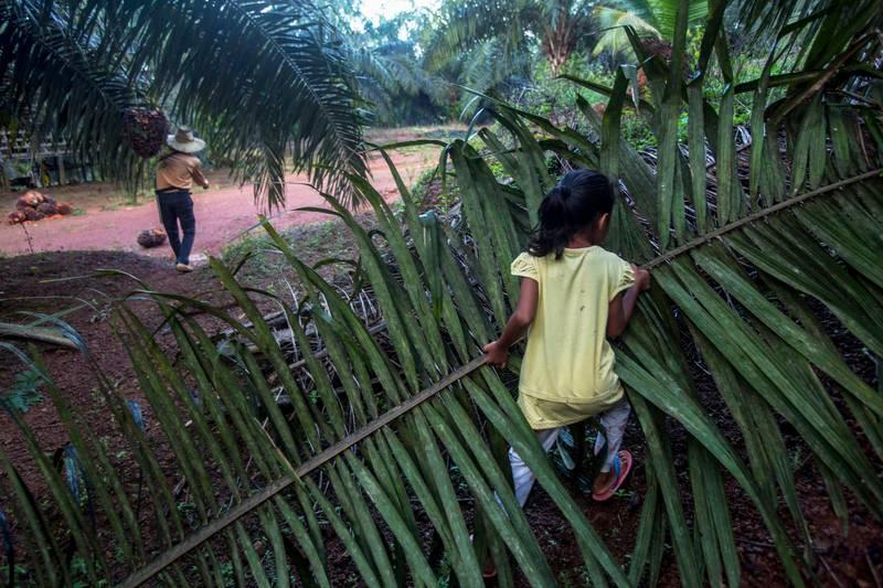 Bildet viser en jente som bærer en stor grein av et palmetre. En voksen person er i bakgrunnen.