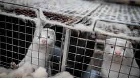 Italia stenger minkfarmer