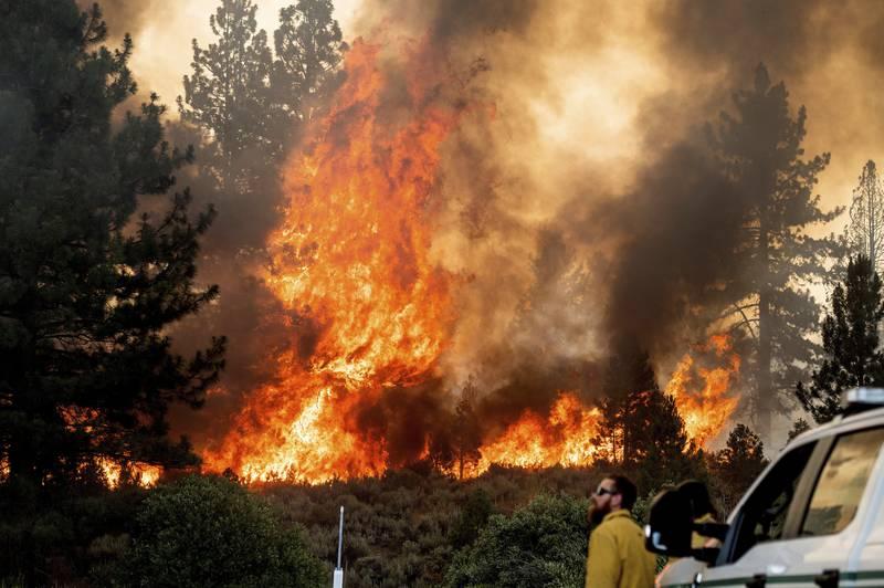 I det nordlige California har en pågående skogbrann spredd seg i løpet av helgen, med god hjelp fra hetebølgen i området. Foto: Noah Berger / AP / NTB