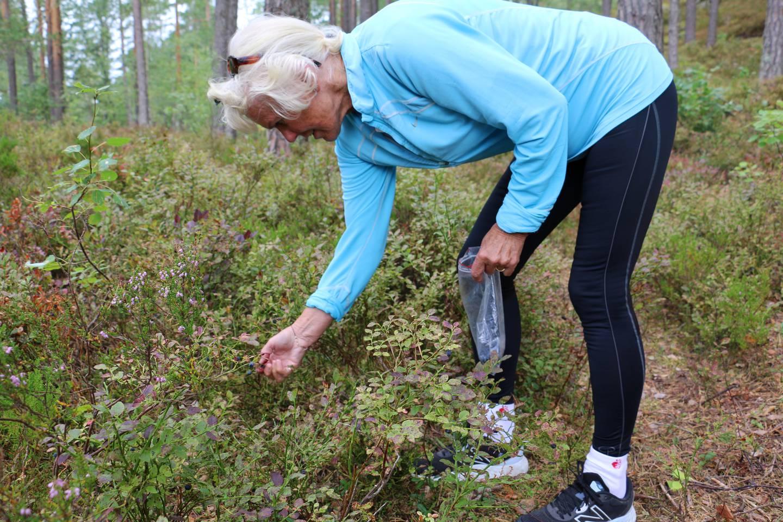 Bildet viser Wenche Garsjø som plukker blåbær i Østmarka.